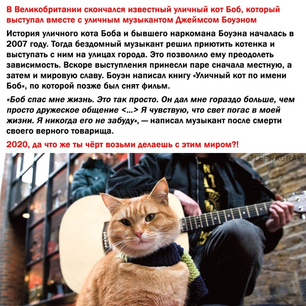 ᐉ как отличить породистого котенка от обычного - zoovet24.ru