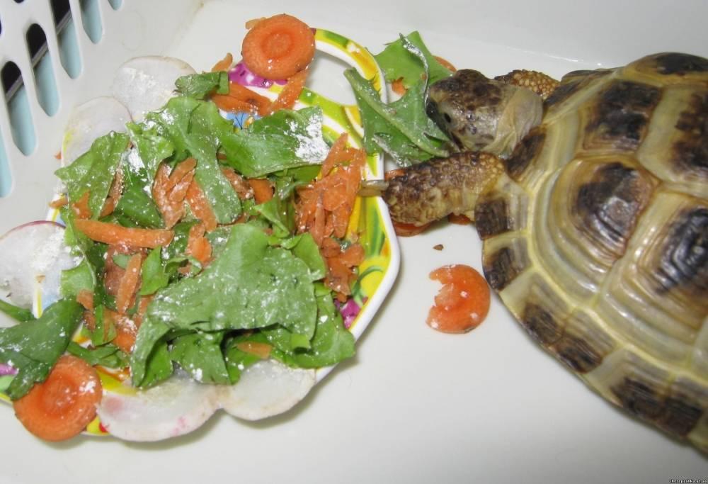 Что можно и что нельзя давать черепахам