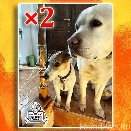 Пятнистые домашние кошки породы - wlcat.ru