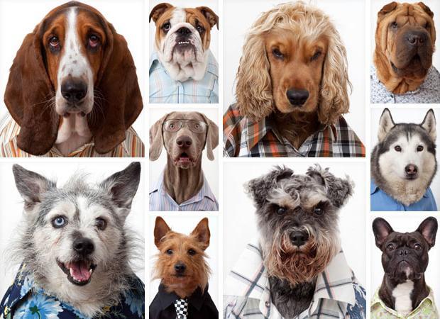 У каких собак выпадают глаза и почему: особенности строения черепа отдельных пород, нюансы ухода, что делать при выпадении глаз у собаки