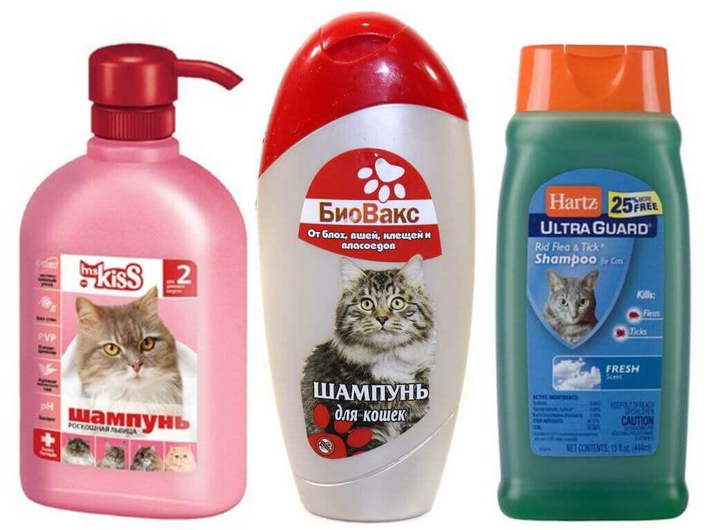 Шампунь от блох для кошек и котят: какой лучше выбрать, эффективно ли это?