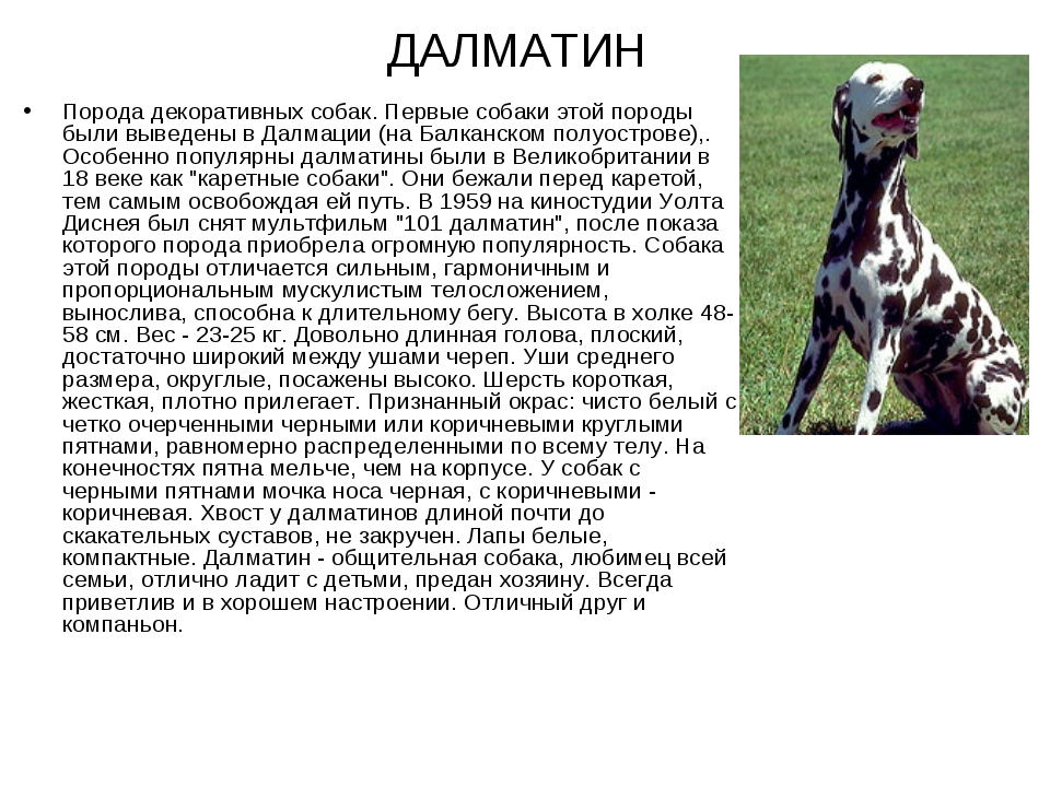 Оттерхаунд порода собак. описание, особенности, характер, уход и цена | givotinki.ru