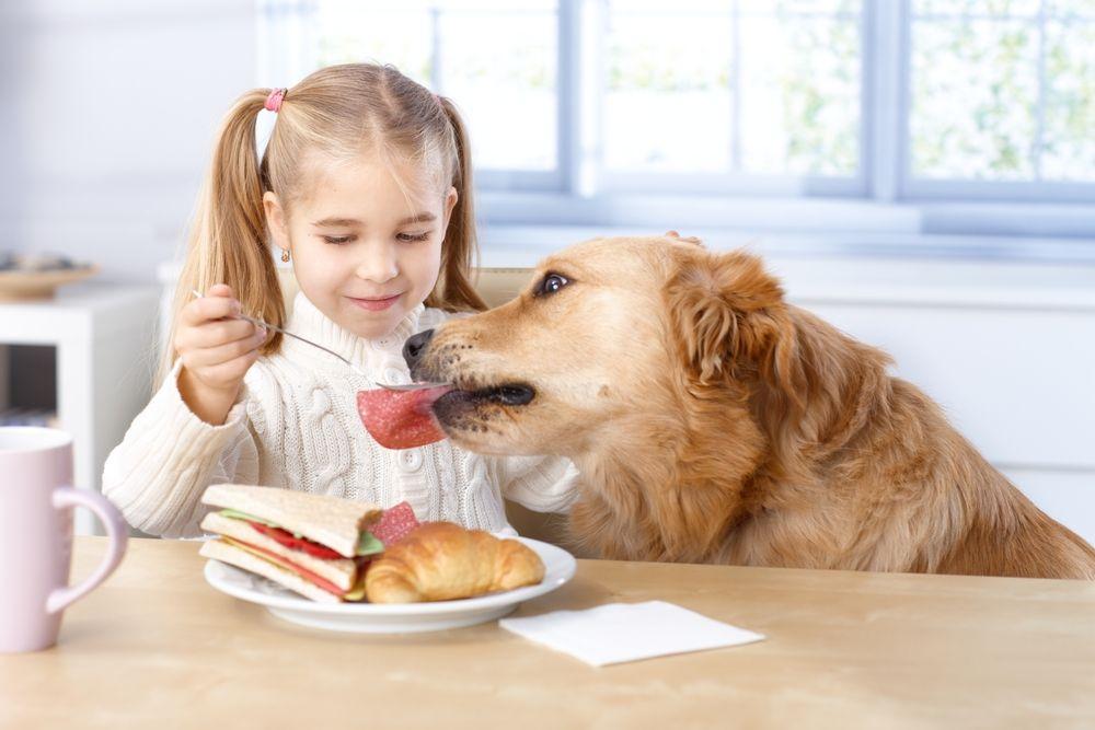 Чем нельзя кормить кошек и котят: запрещенные продукты чем нельзя кормить кошек и котят: запрещенные продукты