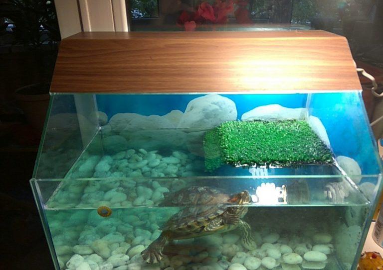 ᐉ водоросли и грунт для аквариума с красноухой черепахой - zoopalitra-spb.ru