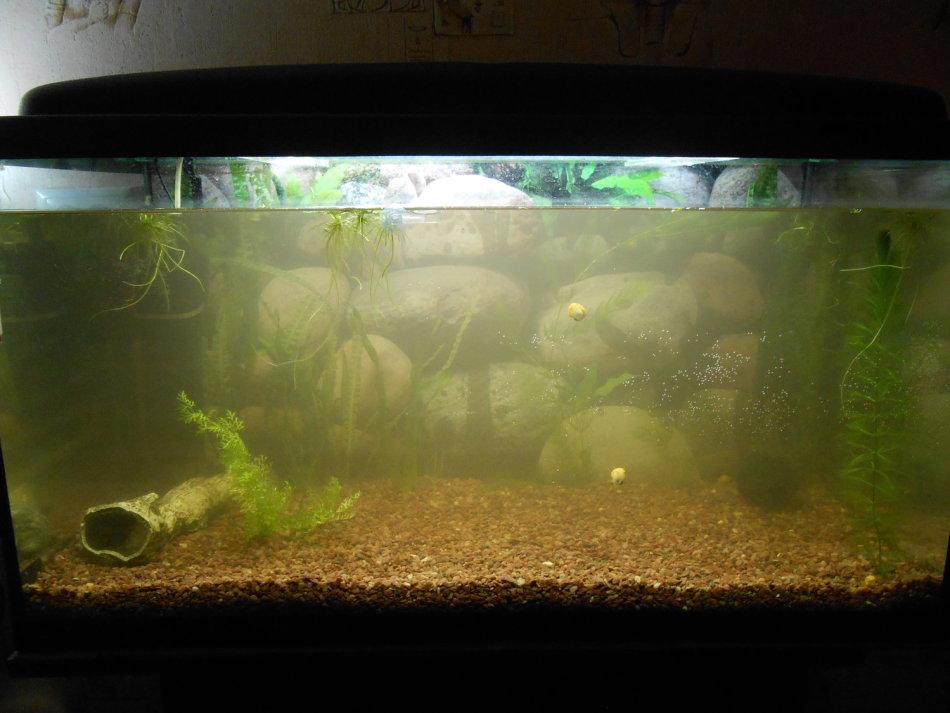 Советы опытных аквариумистов, почему мутнеет вода в аквариуме с рыбками и как этого избежать