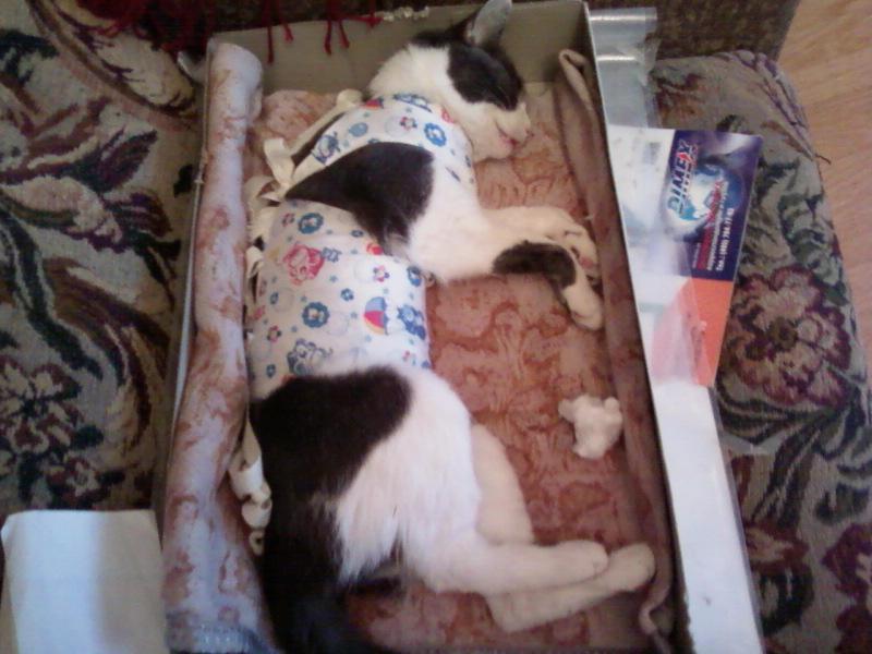 Как долго кот отходит от наркоза после кастрации — отзывы