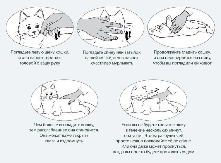 Что делать, если кот грызет пальцы?