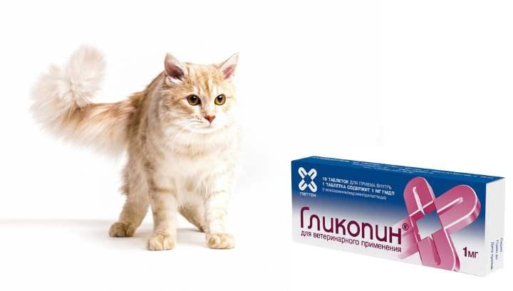 Таблетки «гликопин» для кошек: отзывы, инструкция по применению