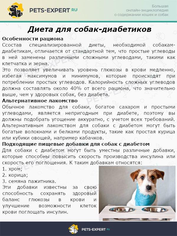 Диетический корм для собак: подробное описание, как выбрать самый лучших корм при заболевании жкт, ожирении и сахарном диабете