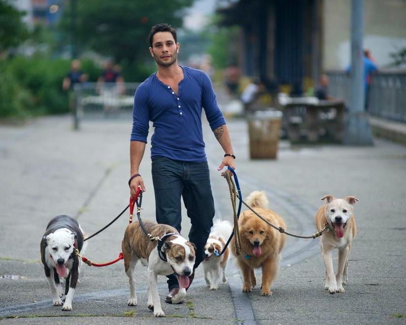 Прогулка с собакой: продолжительность, правила выгула, что взять с собой и чем заняться, правила гигиены после прогулки
