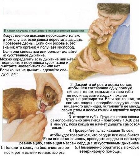Причины, по которым у кота текут слюни