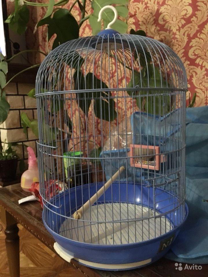 Правильное обустройство: что должно быть у волнистых попугаев в клетке