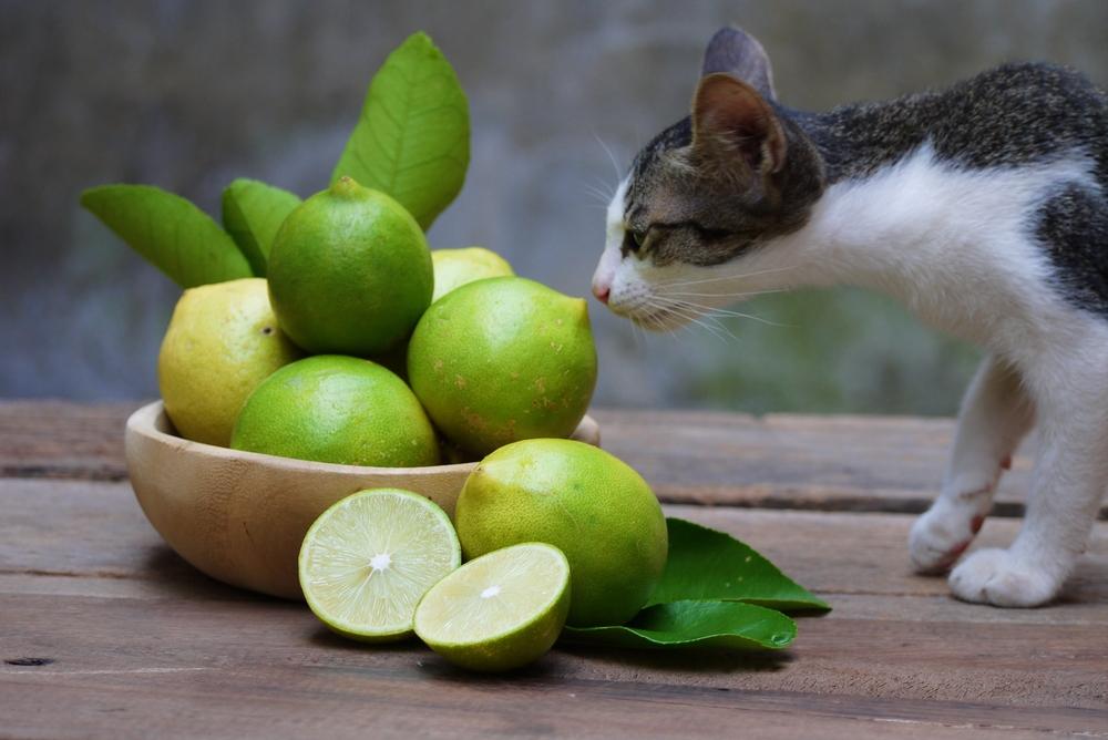 Эксперт назвал 6 запахов, которые ненавидят кошки