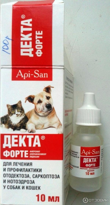 У кошки грязные уши внутри — что означает данный симптом?