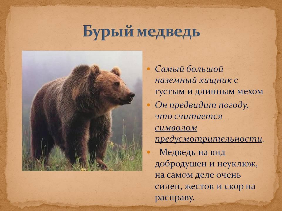 Виды медведей. фото, описание. - удивительный мир животных
