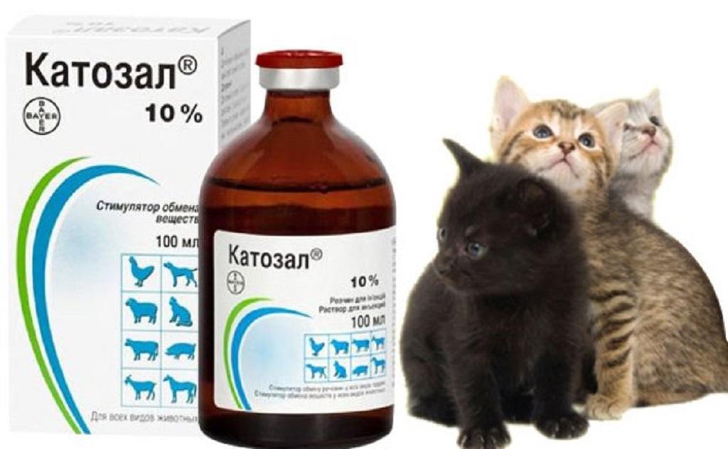 Катозал для кошек: инструкция по применению в ветеринарии, показания и противопоказания, дозировка, отзывы и аналоги