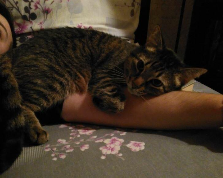 Как правильно наказывать кошку: кнуты, пряники и другой арсенал