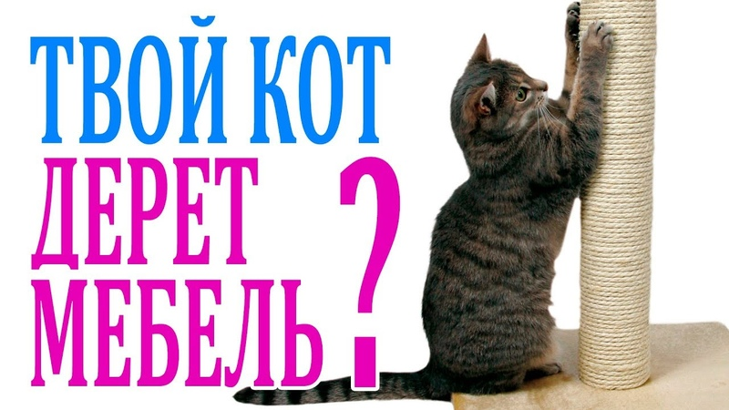Как отучить кота драть обои, мебель [методы, средства] - муркотэ