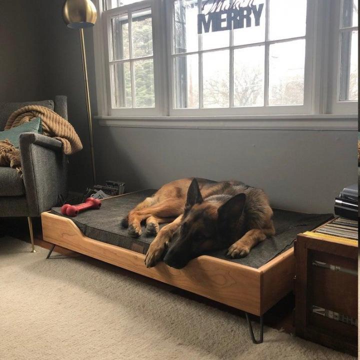 4 способа защитить мебель от собак - защита собак и безопасность собак