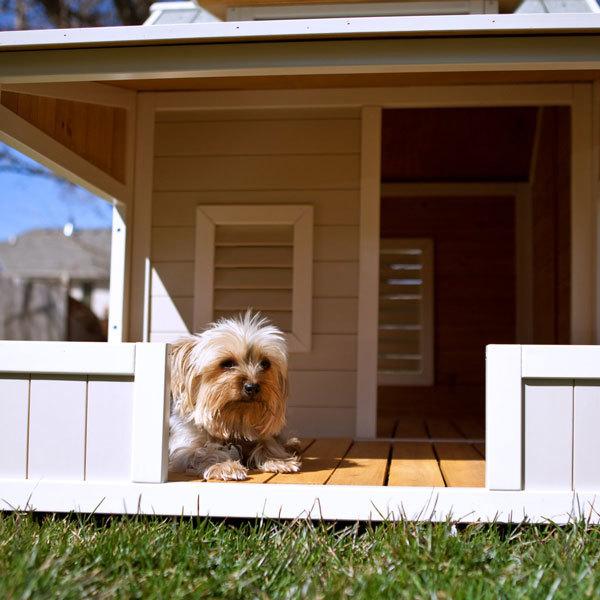 Собаки средних размеров для квартиры: короткошерстные, гладкошерстные, спокойные, домашние, для ребенка - лучшие породы для содержания с фото