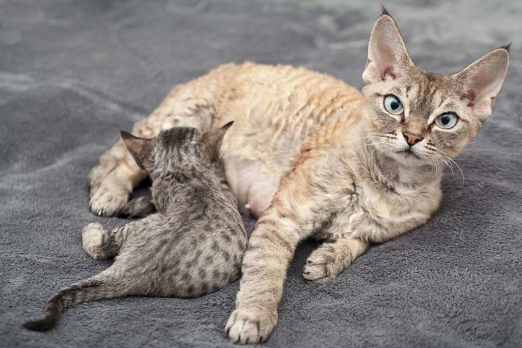 Как сделать кошку ласковой: секреты правильного воспитания