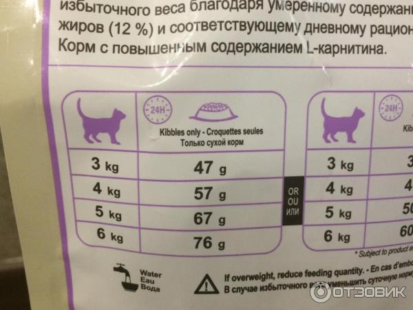 Чем и как кормить кошку правильно: что можно давать и сколько на supersadovnik.ru