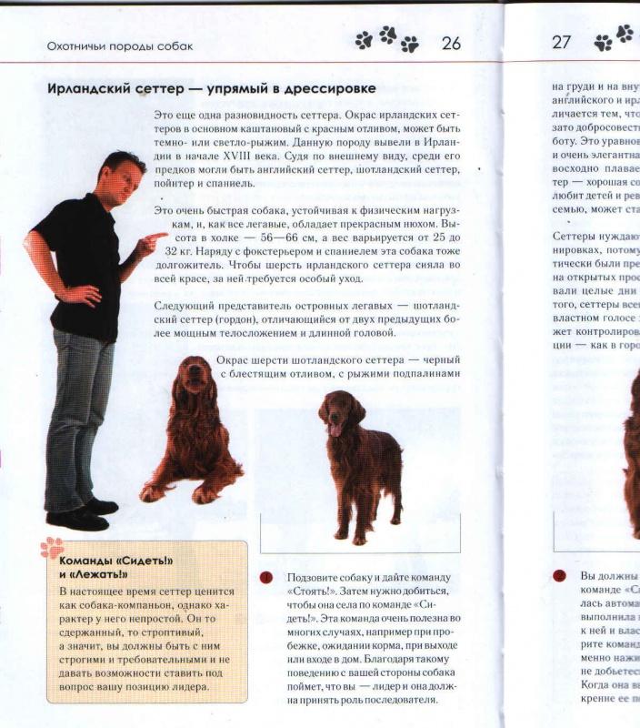 Порода собак английский пойнтер: описание, фото, цена, характер, уход, возможные болезни и питание