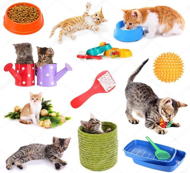 Что купить для котенка в первую очередь [список]