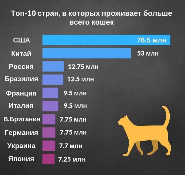 Жирные собаки: самые толстые породы в мире