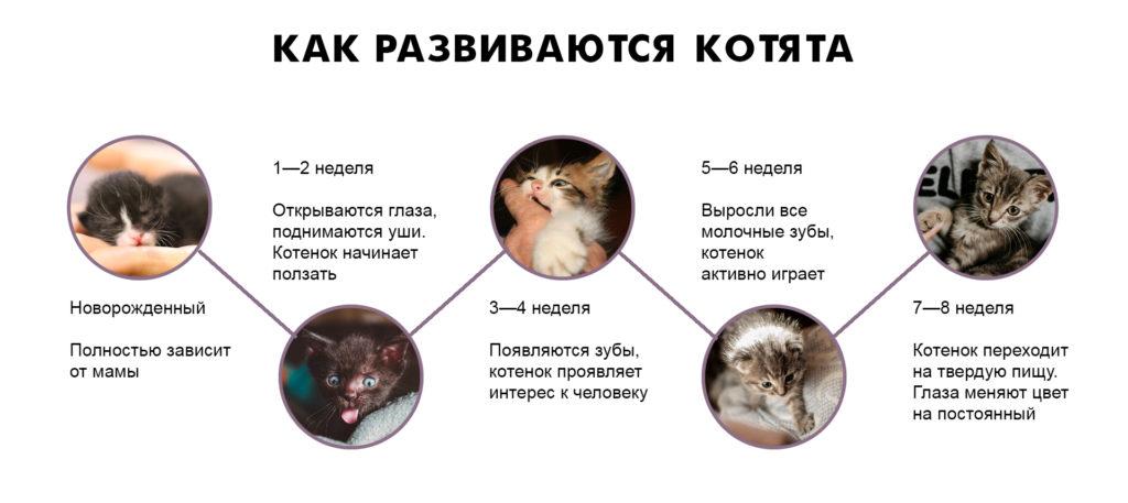 Как определить возраст котенка в домашних условиях: по весу, глазам, зубам