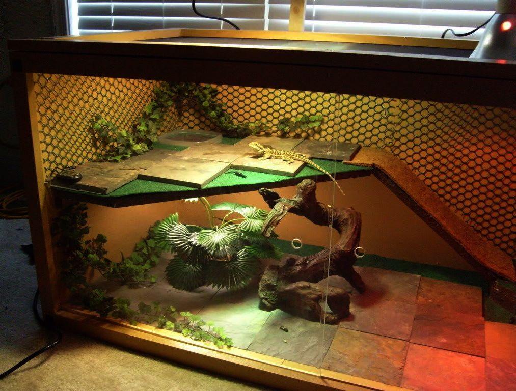 Необычные аквариумные животные для содержания дома