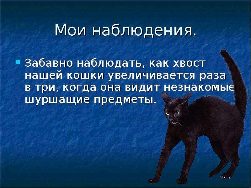 Власоеды у кошек: симптомы и лечение
