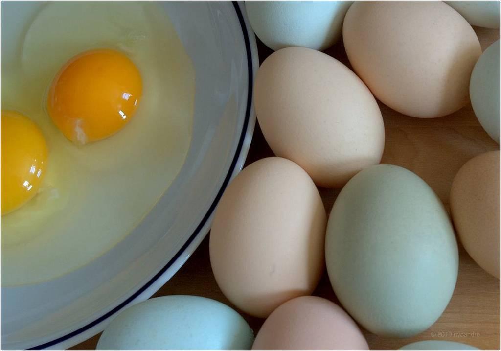 Можно ли собаке давать яйца, какие и в каком виде