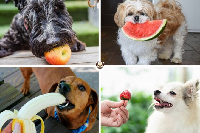 Внимание, всем кто интересуется, можно ли собакам виноград. ответ: категорически нет