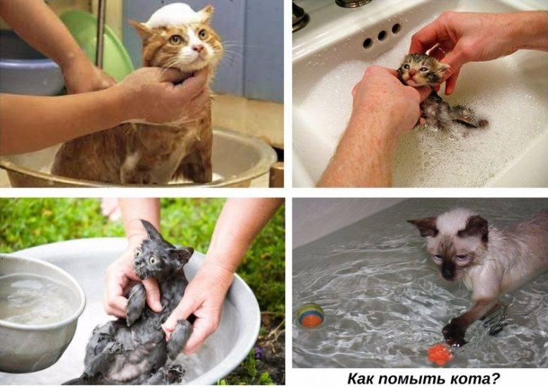 Можно ли мыть кошку обычным шампунем для людей?