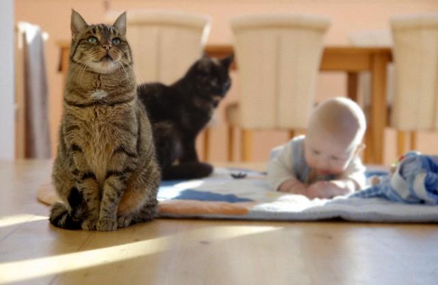 Кто лучше кот или кошка?