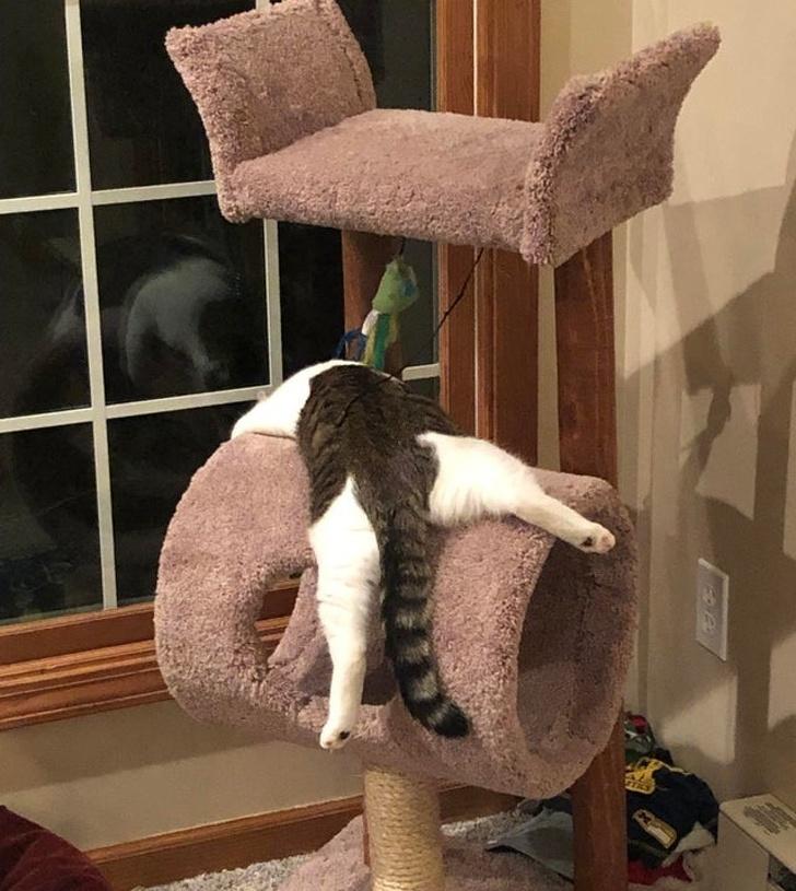 Что поза сна может рассказать о вашей кошке? - zefirka