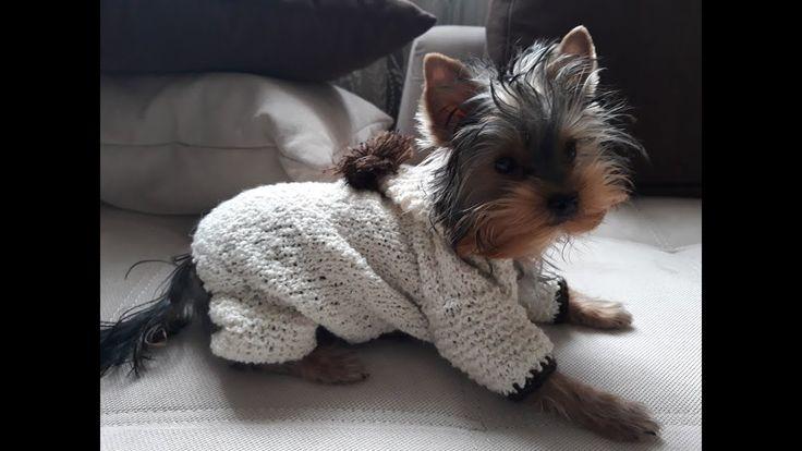 Вязание для собак: как связать комбинезон для собаки небольшого размера