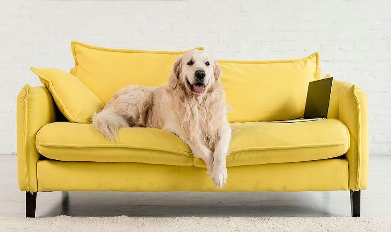 Как выбрать неприхотливую собаку для содержания в квартире: список пород