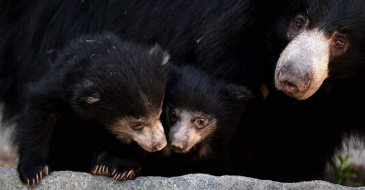 Медведь — разновидности, ареал обитания, питание, содержание в неволе + 83 фото