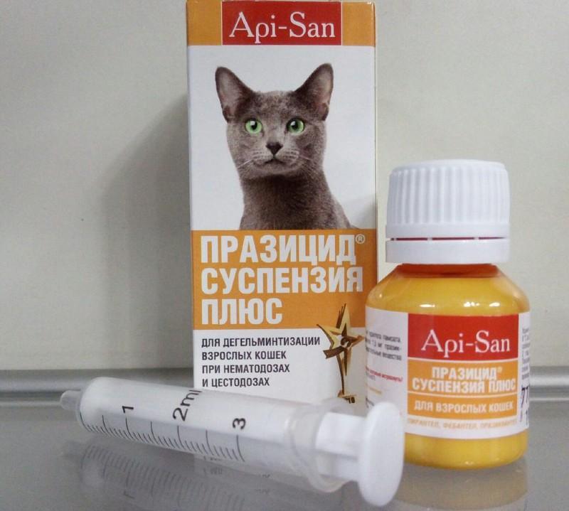 Празицид для кошек: инструкция по применению, действие, эффективность