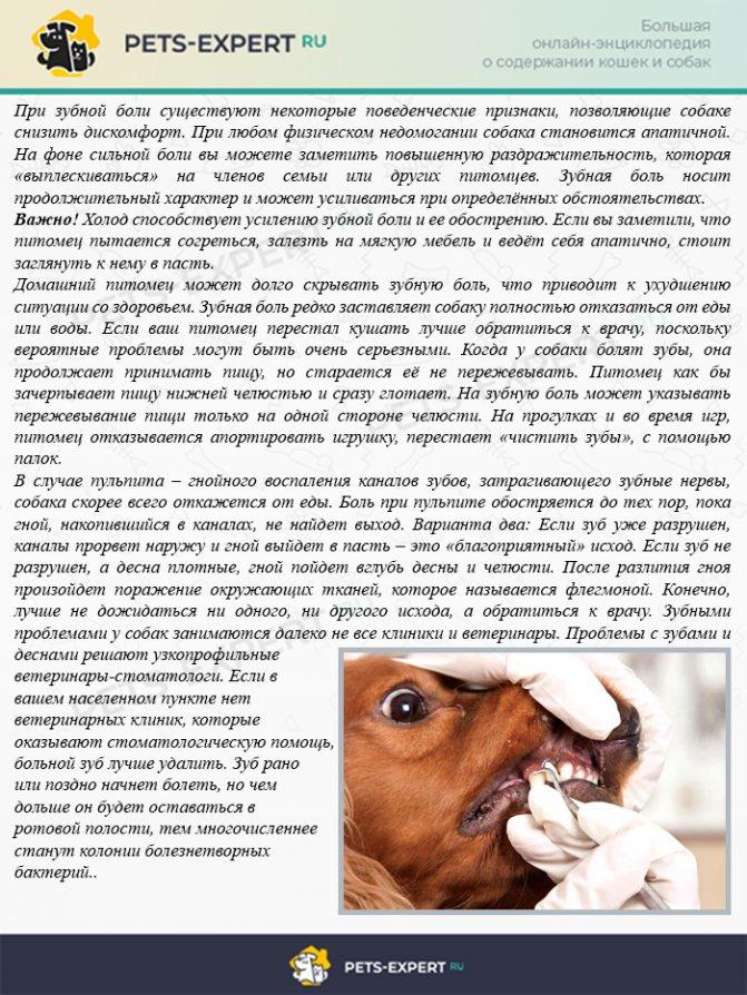 Подробный ответ на вопрос, почему щенок икает после еды