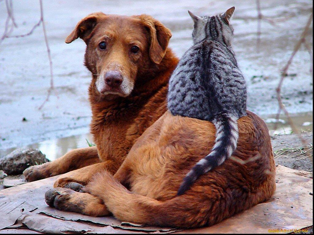Самые добрые собаки. топ-40. | dogkind.ru