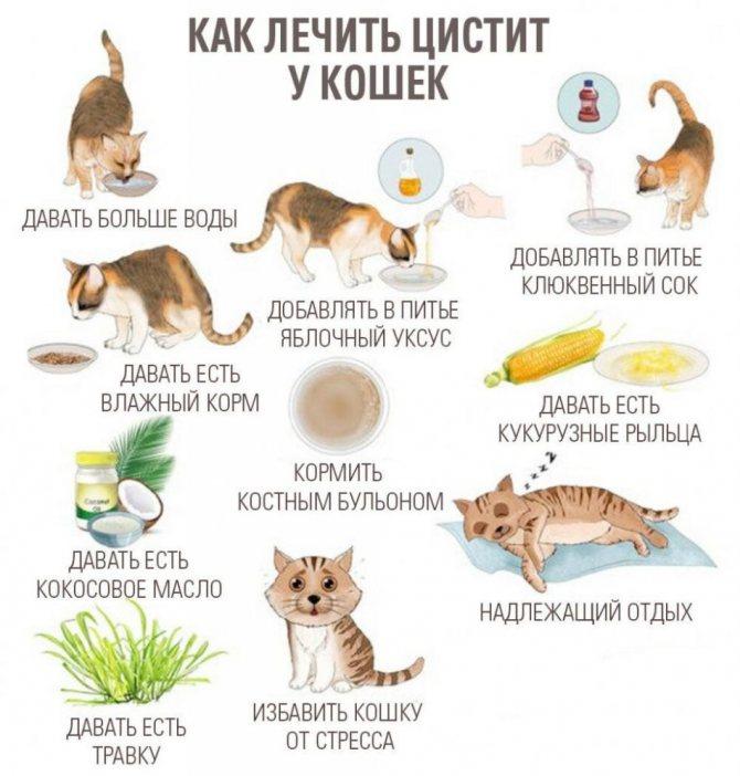 """Кормление при мочекаменной болезни оксалатного типа у кошек. ветеринарная клиника """"зоостатус"""""""