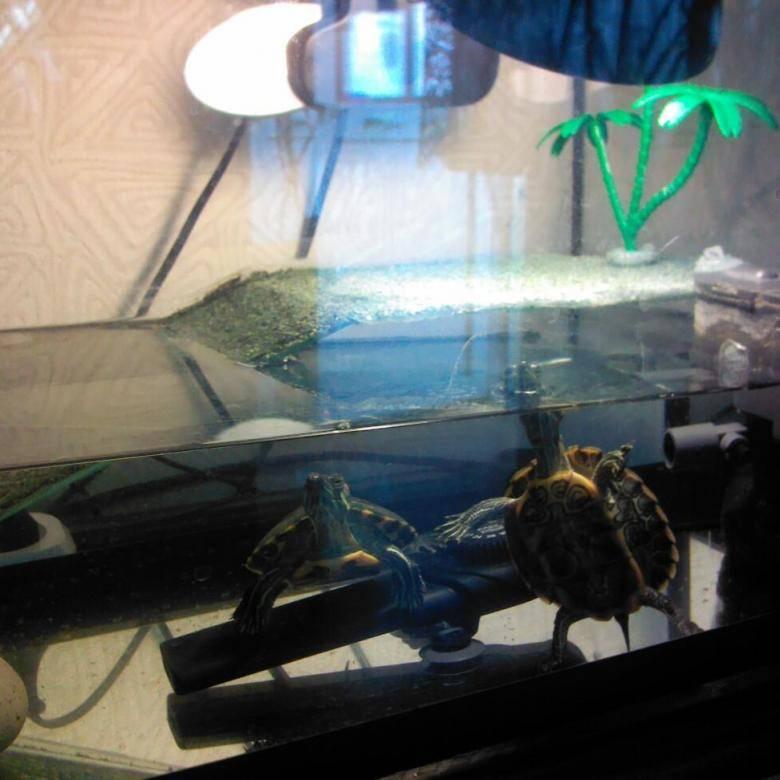 ᐉ как сделать аквариум (акватеррариум) для красноухой черепахи своими руками в домашних условиях - zoopalitra-spb.ru