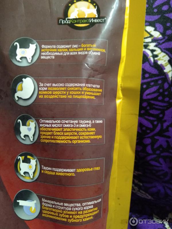 Корм для котят ночной охотник: состав и энергетическая ценность, ассортимент и отзывы