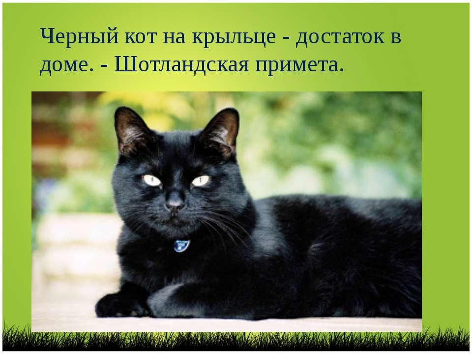 Что несут в дом рыжие кошки и коты