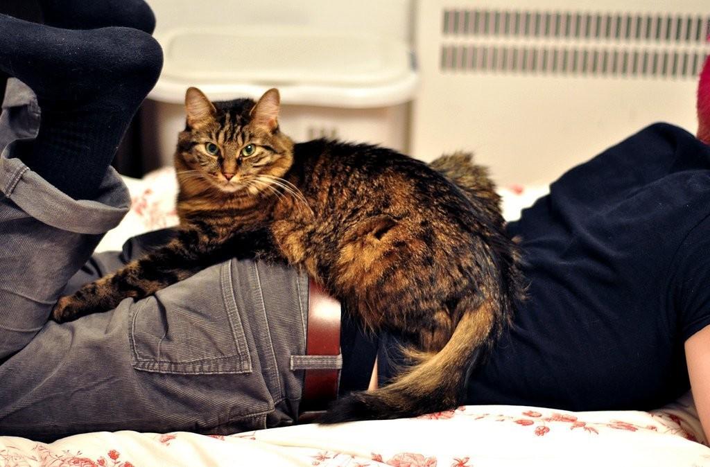 Почему кошка расстроена? несколько вещей, которые испортят настроение любой кошке - gafki.ru