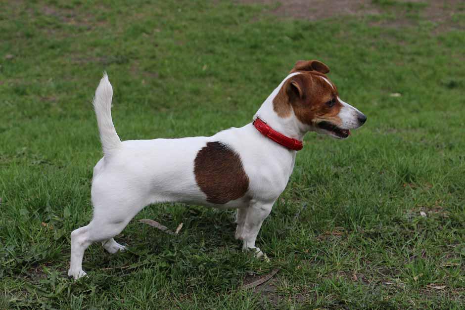 Маленькие породы собак — фото с названиями собачек