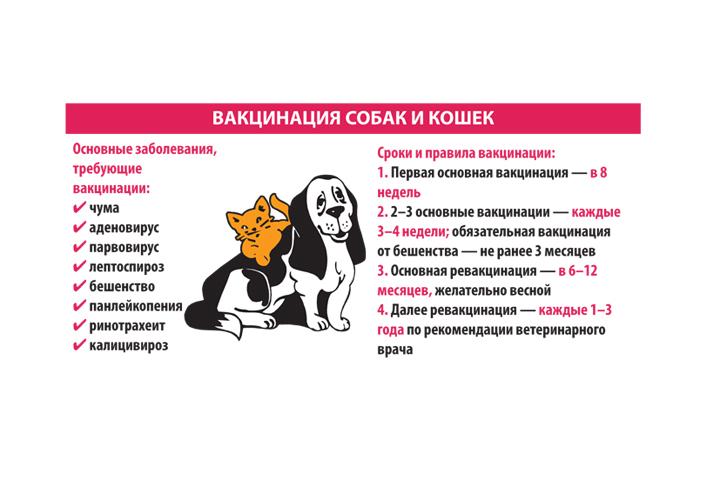 "Какие прививки и в каком возрасте делают собакам, таблица | блог ветклиники ""беланта"""